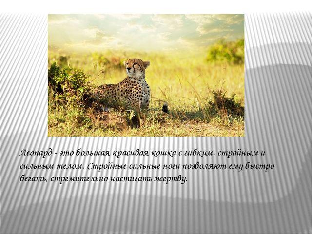 Леопард - это большая красиваякошкас гибким, стройным и сильным телом. Стро...
