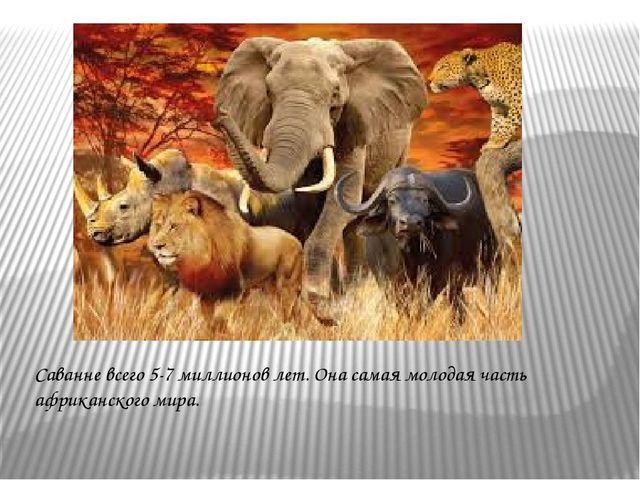 Саванне всего 5-7 миллионов лет. Она самая молодая часть африканского мира.