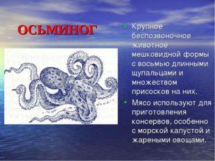 ОСЬМИНОГ Крупное беспозвоночное животное мешковидной формы с восьмью д