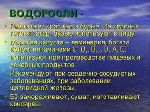 ВОДОРОСЛИ - Различают красные и бурые. Из красных готовят агар, бурые использ
