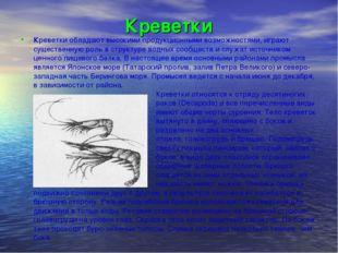 Креветки Креветки обладают высокими продукционными возможностями, играют суще