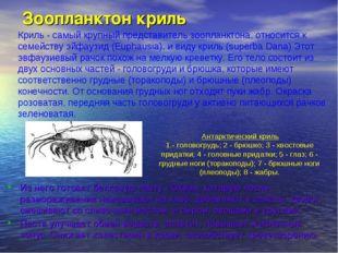 Зоопланктон криль Из него готовят белковую пасту «Океан, которую после размо