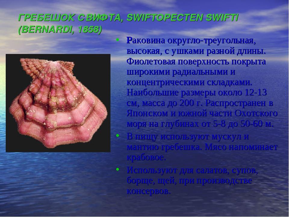 ГРЕБЕШОК СВИФТА, SWIFTOPECTEN SWIFTI (BERNARDI, 1858) Раковина округло-треуго...