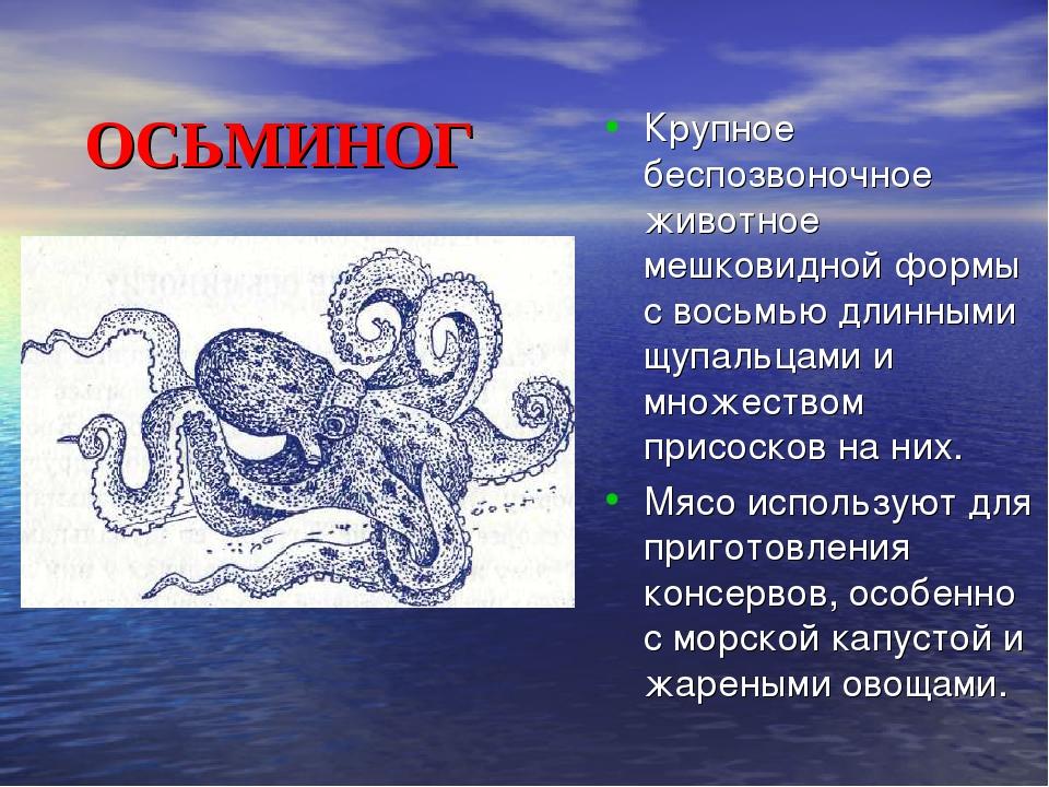 ОСЬМИНОГ Крупное беспозвоночное животное мешковидной формы с восьмью д...