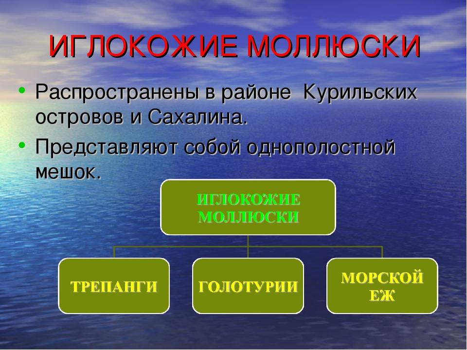 ИГЛОКОЖИЕ МОЛЛЮСКИ Распространены в районе Курильских островов и Сахалина. Пр...