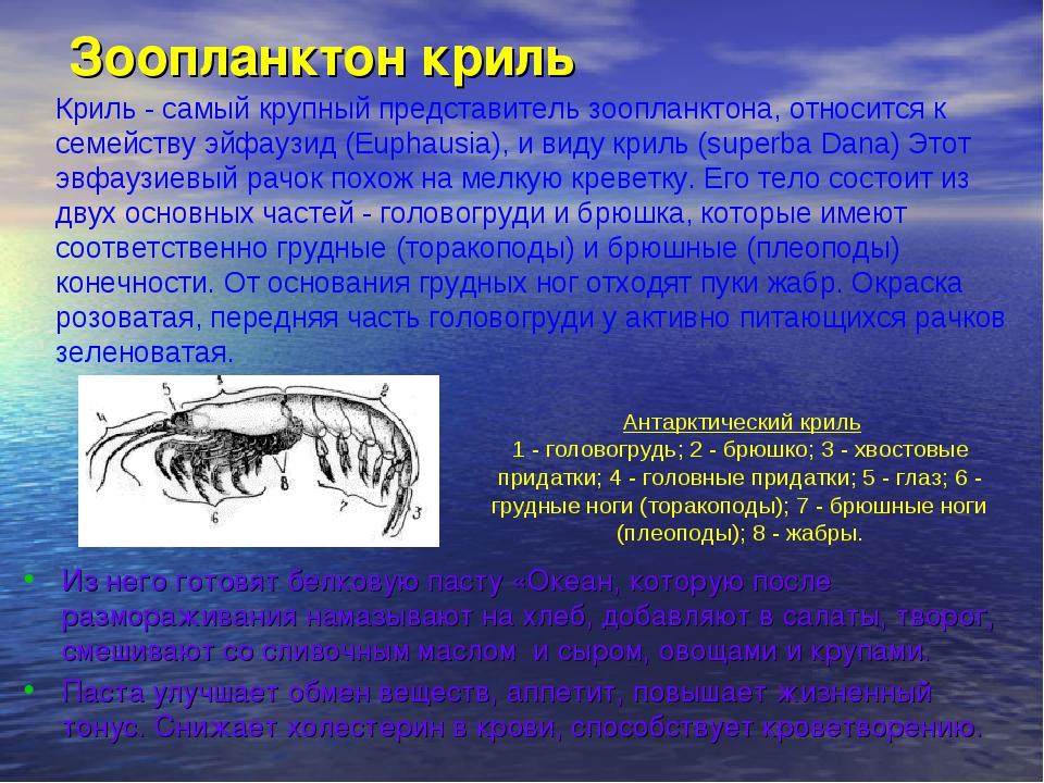 Зоопланктон криль Из него готовят белковую пасту «Океан, которую после размо...