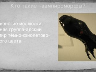 Кто такие –вампироморфы? Головоногие моллюски, древняя группа-адский вампир т