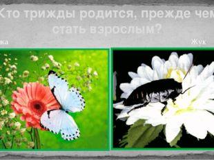Бабочка Жук Кто трижды родится, прежде чем стать взрослым?