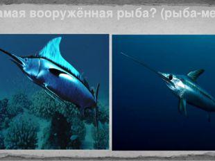 Самая вооружённая рыба? (рыба-меч)