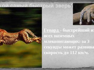 Какой самый быстрый зверь? Гепард - быстрейший из всех наземных млекопитающих