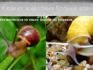 У каких животных больше всех зубов? У всех моллюсков на языке- радуле до 500р
