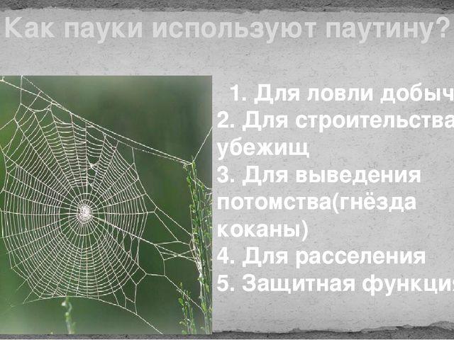 Как пауки используют паутину? 1. Для ловли добычи 2. Для строительства убежищ...
