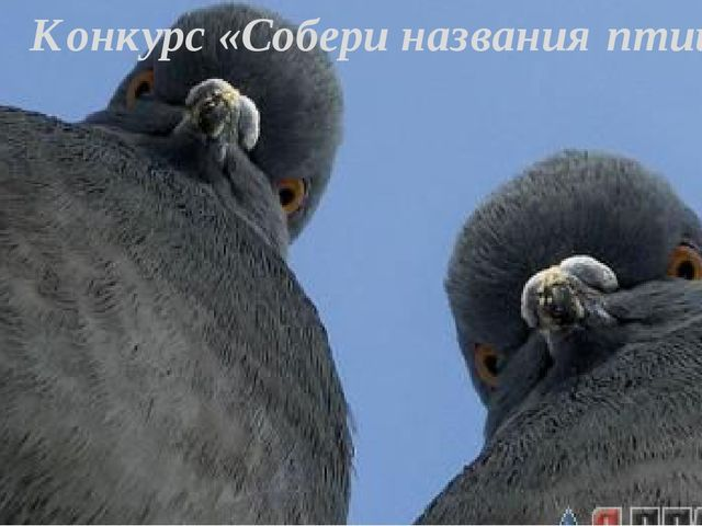 Конкурс «Собери названия птиц»