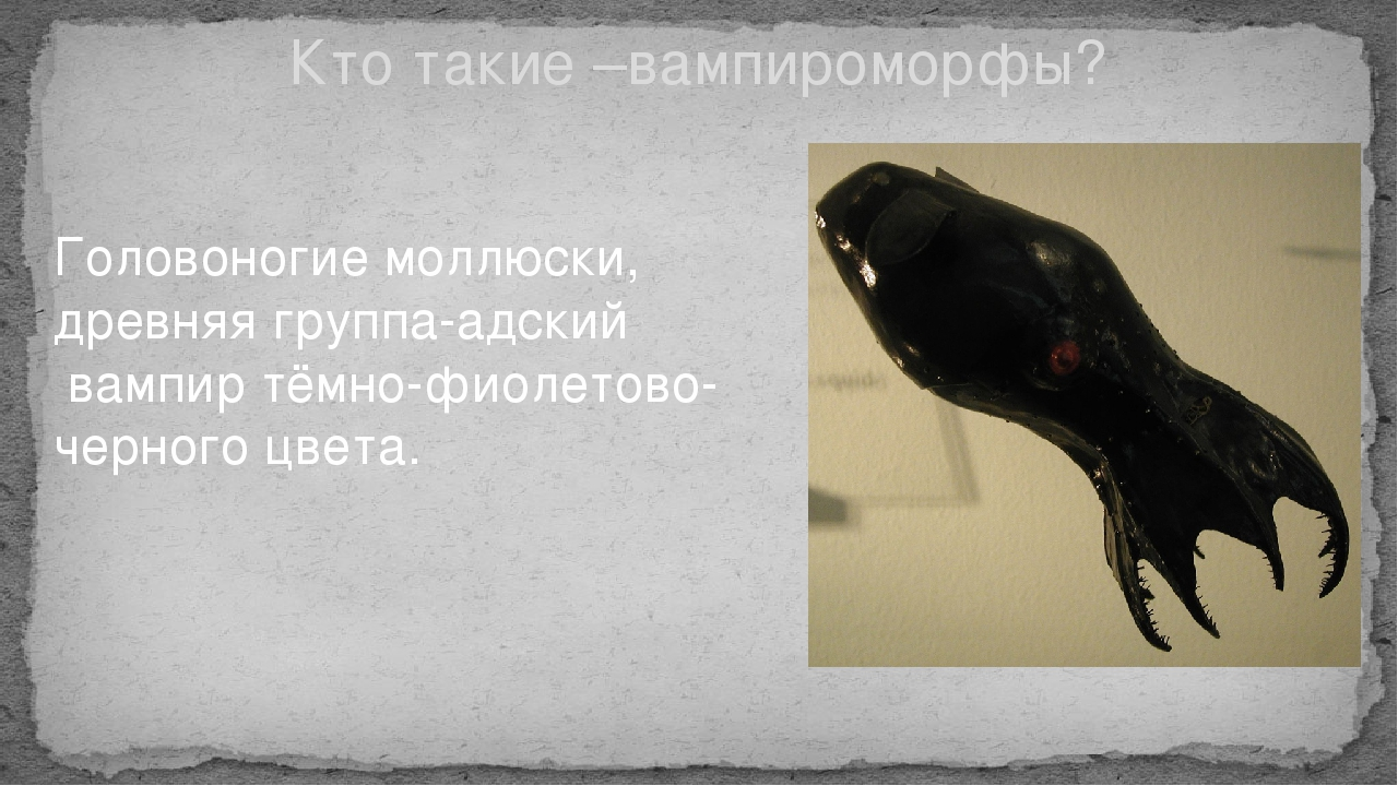 Кто такие –вампироморфы? Головоногие моллюски, древняя группа-адский вампир т...