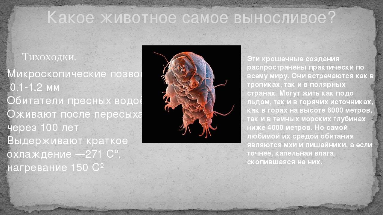 Тихоходки. Какое животное самое выносливое? Микроскопические позвоночные 0.1-...
