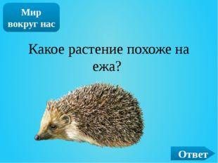 ОТВЕТ Кот