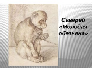 Саверей «Молодая обезьяна»