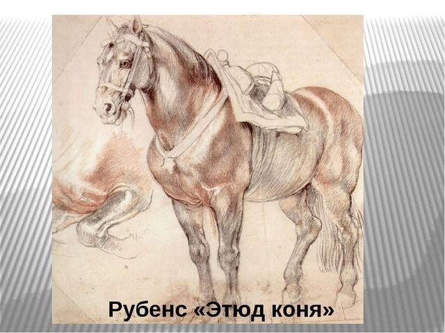 Рубенс «Этюд коня»