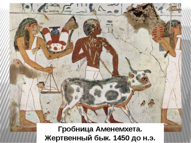 Гробница Аменемхета. Жертвенный бык. 1450 до н.э.