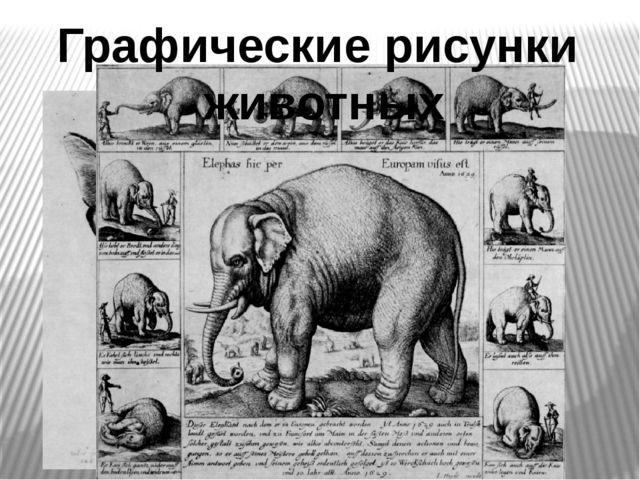 Графические рисунки животных
