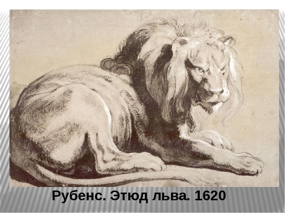 Рубенс. Этюд льва. 1620