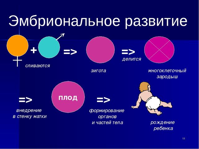 Эмбриональное развитие => сливаются зигота делится многоклеточный зародыш =>...