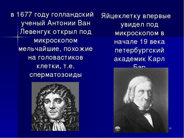 в 1677 году голландский ученый Антонии Ван Левенгук открыл под микроскопом ме...