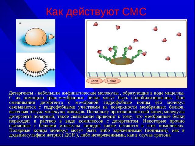 Как действуют СМС Детергенты - небольшие амфипатические молекулы , образующие...