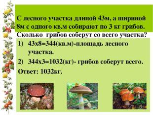 С лесного участка длиной 43м, а шириной 8м с одного кв.м собирают по 3 кг гр
