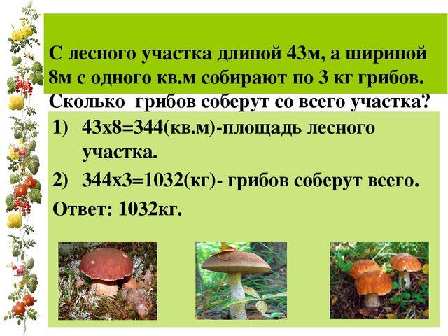 С лесного участка длиной 43м, а шириной 8м с одного кв.м собирают по 3 кг гр...