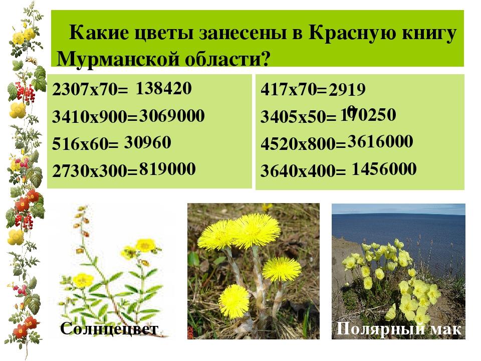 Какие цветы занесены в Красную книгу Мурманской области? 2307х70= 3410х900=...