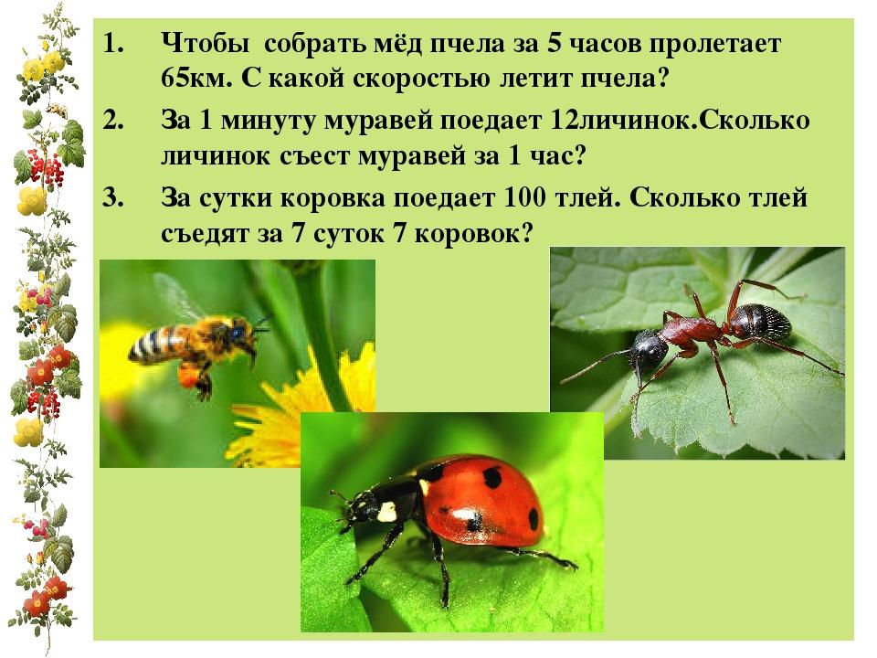 Чтобы собрать мёд пчела за 5 часов пролетает 65км. С какой скоростью летит пч...