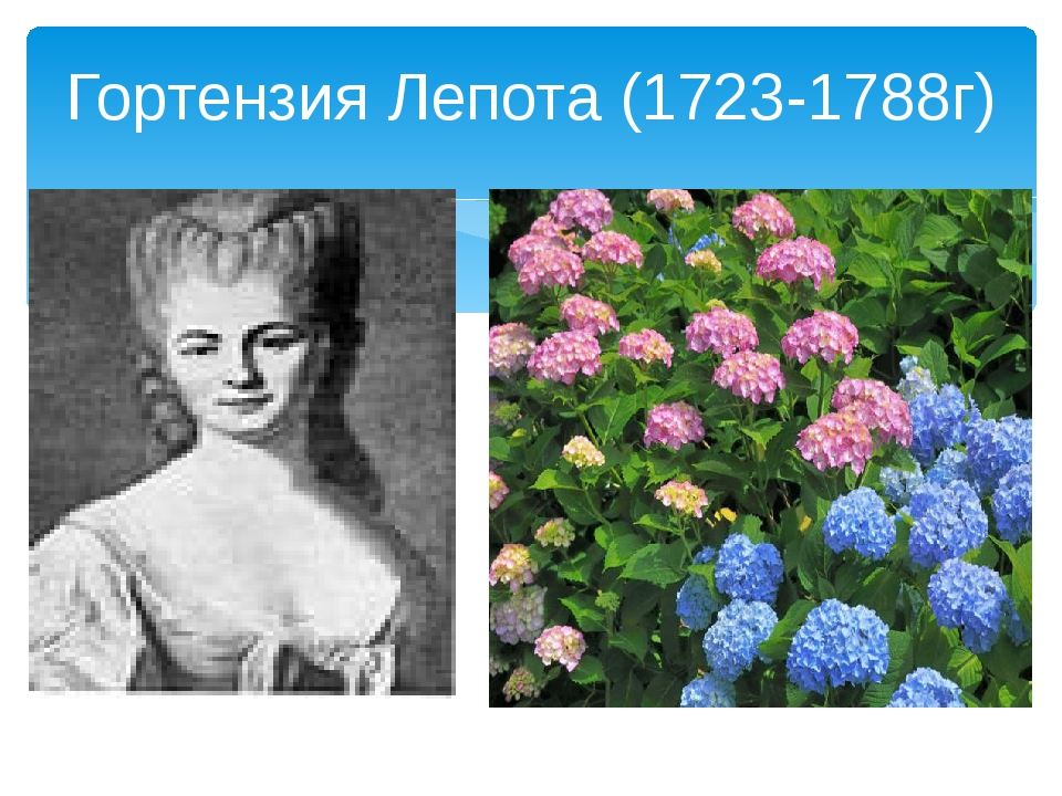Гортензия Лепота (1723-1788г)