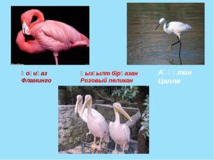 Қоқиқаз Фламинго Аққұтан Цапля Қызғылт бірқазан Розовый пеликан