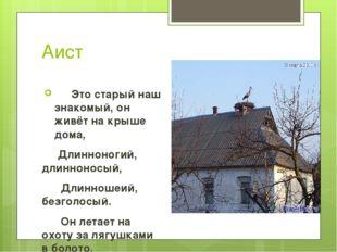 Аист Это старый наш знакомый, он живёт на крыше дома, Длинноногий, длиннонос