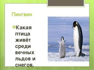 Пингвин Какая птица живёт среди вечных льдов и снегов, умеет хорошо плавать и