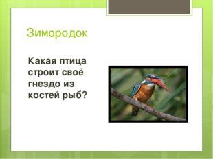 Зимородок Какая птица строит своё гнездо из костей рыб?