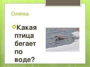 Оляпка Какая птица бегает по воде?