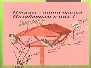 Какая самая маленькая птица в России? Какие птицы в снегу ночуют? Какая птиц