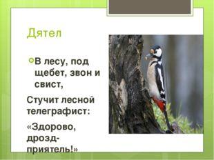 Дятел В лесу, под щебет, звон и свист, Стучит лесной телеграфист: «Здорово, д