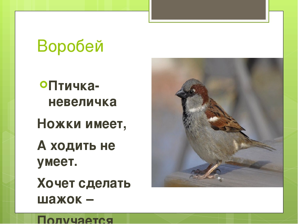 Воробей Птичка-невеличка Ножки имеет, А ходить не умеет. Хочет сделать шажок...