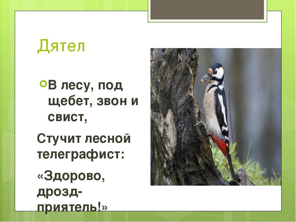 Дятел В лесу, под щебет, звон и свист, Стучит лесной телеграфист: «Здорово, д...