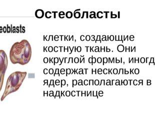 Остеобласты клетки, создающие костную ткань. Они округлой формы, иногда содер