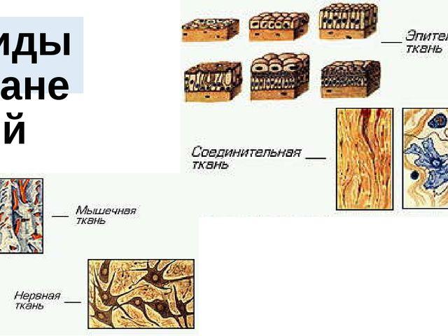 Виды тканей