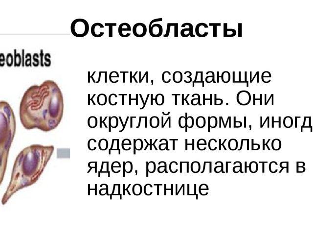 Остеобласты клетки, создающие костную ткань. Они округлой формы, иногда содер...