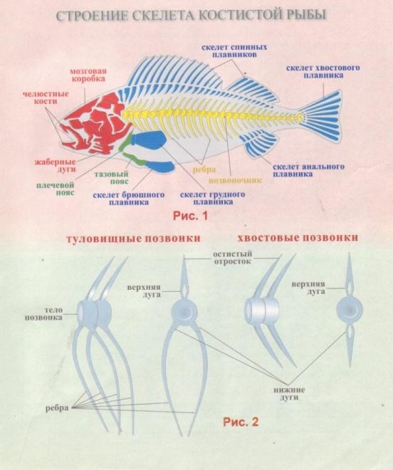 Опарыши для рыбалки как ebftourru