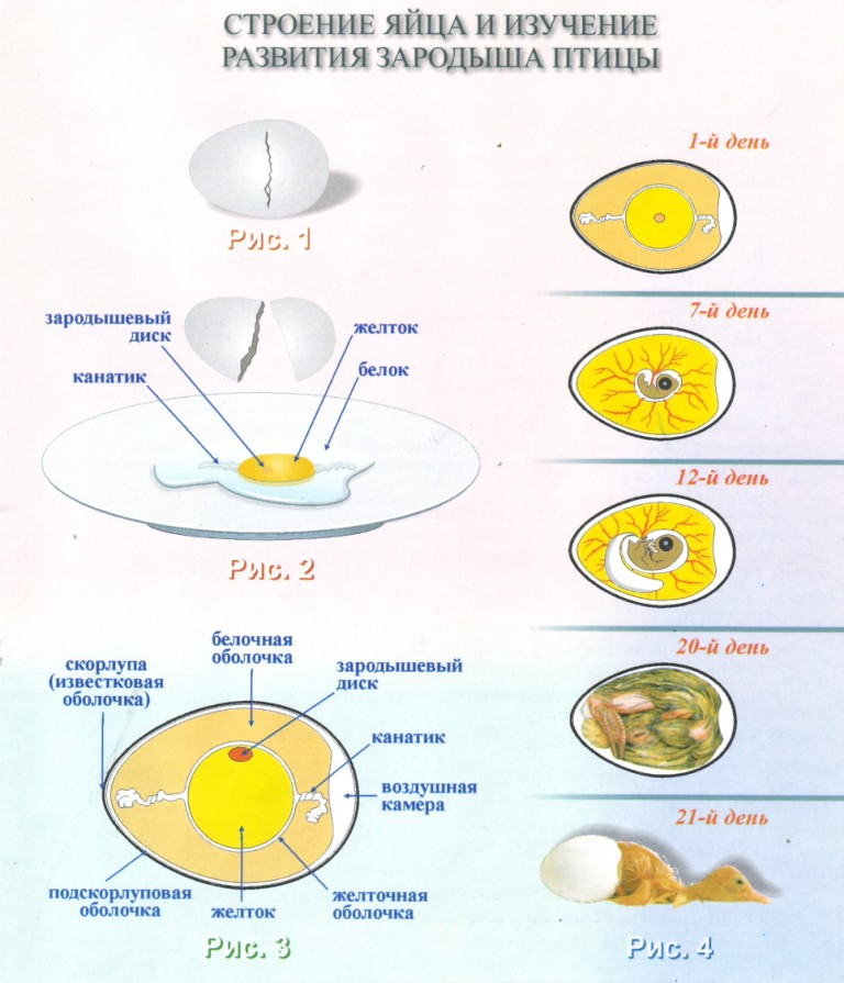 Способы хранения и приготовления яиц (5 класс)