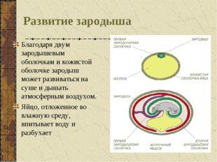 Развитие зародыша Благодаря двум зародышевым оболочкам и кожистой оболочке за