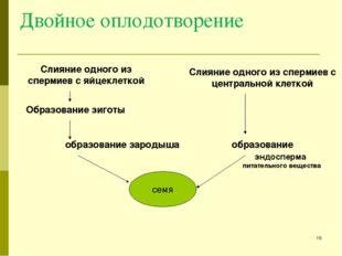 Двойное оплодотворение Слияние одного из спермиев с яйцеклеткой Образование з