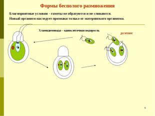 Формы бесполого размножения Благоприятные условия – гаметы не образуются и не